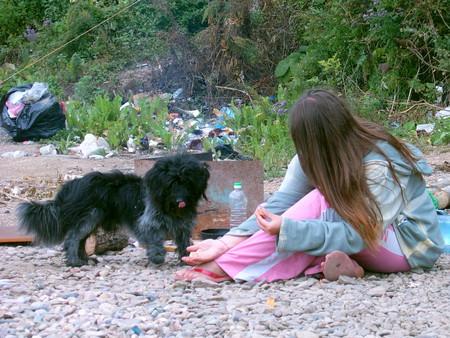 бродячая собака в гости к нам пришла… клянусь -мусор не наш