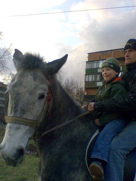 наша первая лошадка