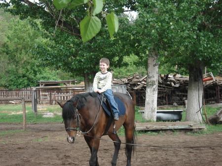 катание на лошади дарит восторг и здоровье
