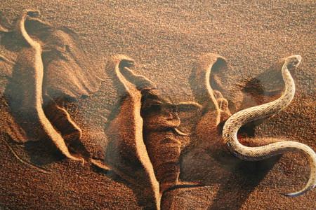 """""""Двигаться незаметно"""". Пустыня Намиб."""