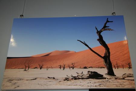 Долина мертвых деревьев. Ирина Кондратьева