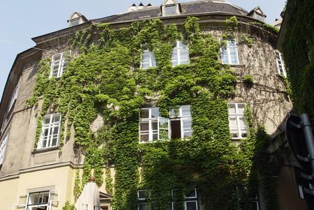 Наше лето 2010: Австрия-Италия-Австрия. Часть вторая: Вена — фото 30