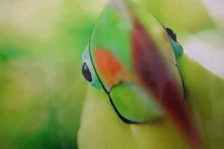 Портрет Тукана. Коста-Рика. Автор — Мартин ван Локвен.