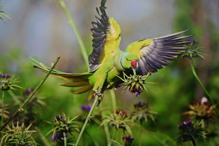 Лакомство попугая — колючка