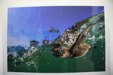 Пятнично-выставочное 11 или Не только о черепахах — фото 6
