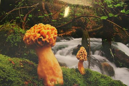 Немного пятничных грибов)