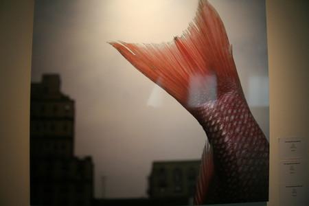 Пятнично-выставочное 7 или Идеальный Мир Корнели Толленс — фото 4