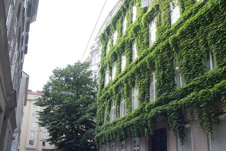 Наше лето 2010: Австрия-Италия-Австрия. Часть вторая: Вена — фото 20