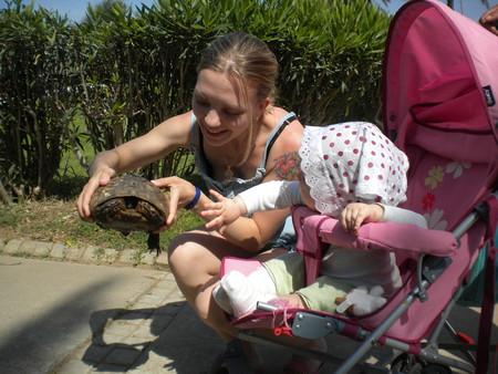 сухопутная черепаха, достопримечательность г.Белек, Турция