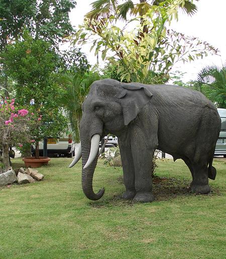 Таиланд. Остров Пхукет. Часть 3. Ребятам о зверятах. — фото 22