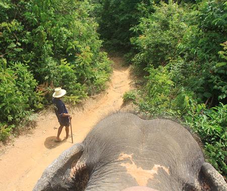 Таиланд. Остров Пхукет. Часть 3. Ребятам о зверятах. — фото 12