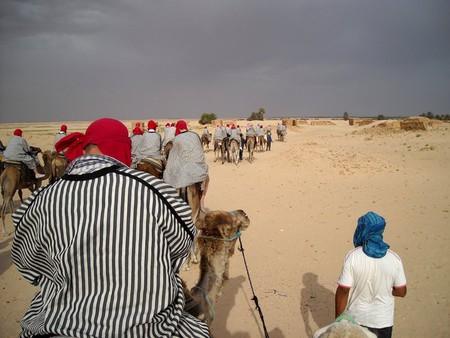 Прогулки на верблюдах