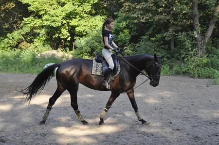 Конный спорт - с самого начала — фото 4