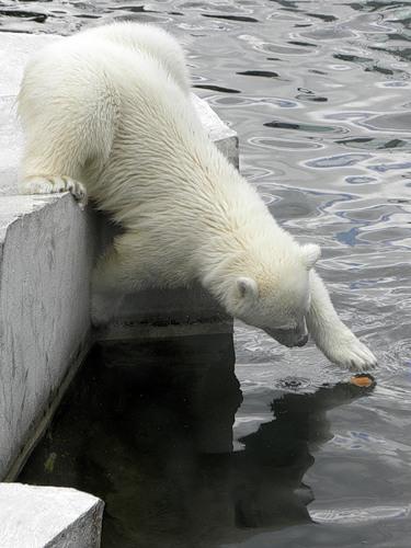 Айда в Зоопарк! — фото 21