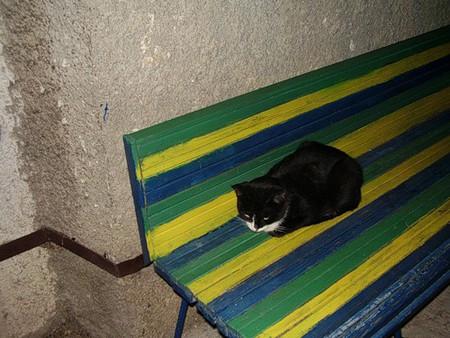 Скамейка возле дома. Днём сидят старушки, вечером влюбленные парочки, а по ночам кошки...