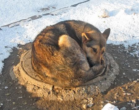 а вот вся братия бомжей и собак постепенно перебрались с улиц в переходы метро, в подвалы и канализацию...