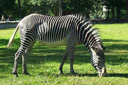 Айда в Зоопарк! — фото 18