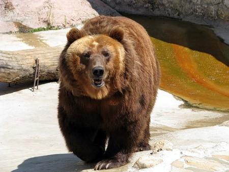 Айда в Зоопарк! — фото 16