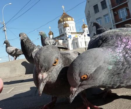 Московская осень в лицах... — фото 57