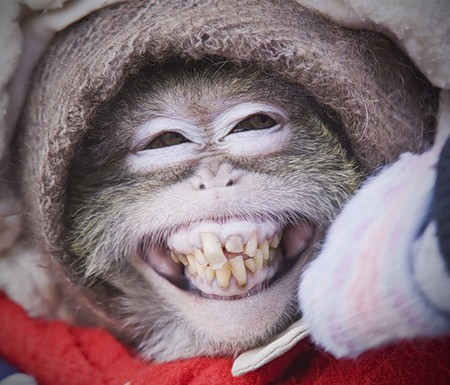 а вот обезьянка хоть и рот до ушей растянула, но мороза всё равно испугалась...)