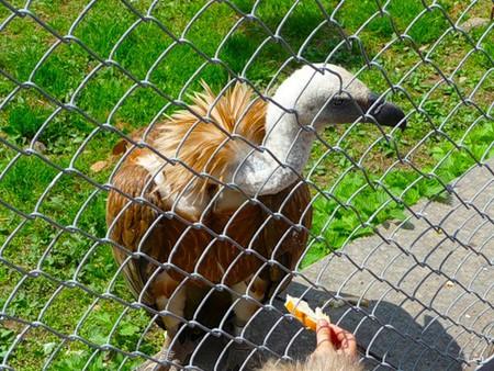 Айда в Зоопарк! — фото 22