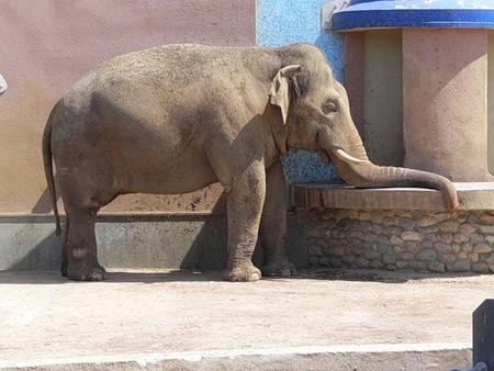 Айда в Зоопарк! — фото 15