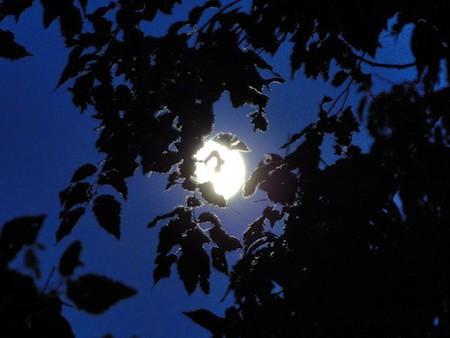 Луна в кружеве листвы!