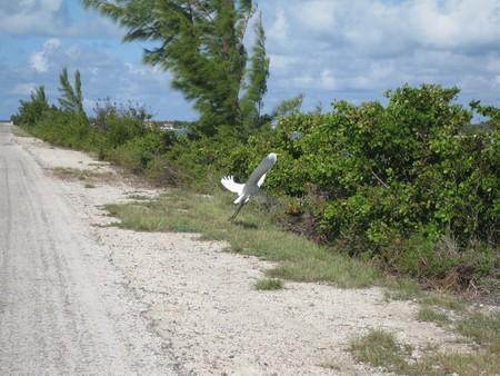 Вояж мечты. Ударим автопробегом по Кубе! — фото 43