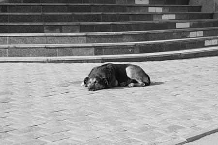 Московская осень в лицах... — фото 55