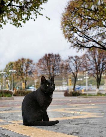 Московская осень в лицах... — фото 61
