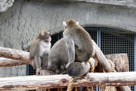 Айда в Зоопарк! — фото 4