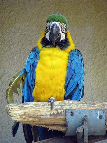 Айда в Зоопарк! — фото 19