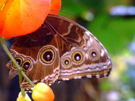 Музей бабочек понравился нам всем