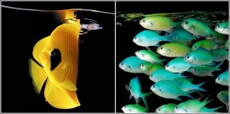 Марк Лаита раскрывает тайны морских глубин — фото 3