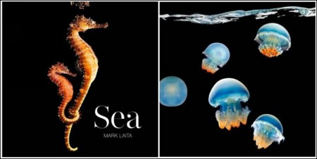 Марк Лаита раскрывает тайны морских глубин — фото 1