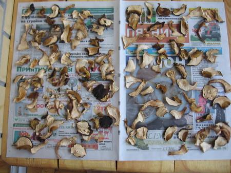Сушеные грибы — фото 3
