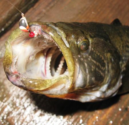 прогноз клева рыбы в каменногорске