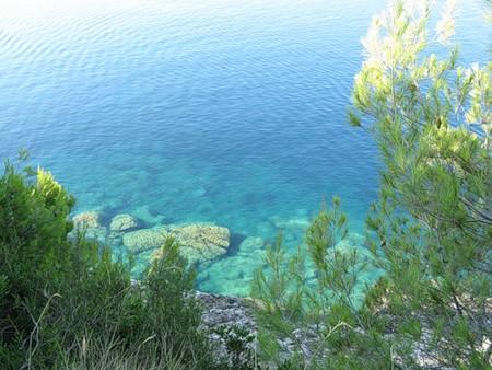 Хорватия. Сосны над морем. — фото 2