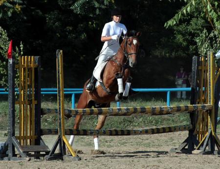 На все четыре копыта или можно ли мне заниматься конным спортом? — фото 4