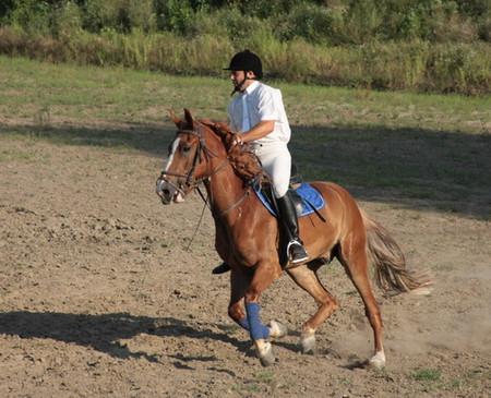 На все четыре копыта или можно ли мне заниматься конным спортом? — фото 3