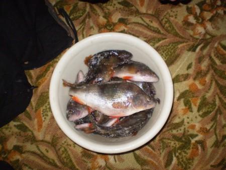 Зимняя рыбалка: открытие сезона-2010 — фото 5