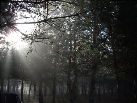 Зачарованные Десной... — фото 5