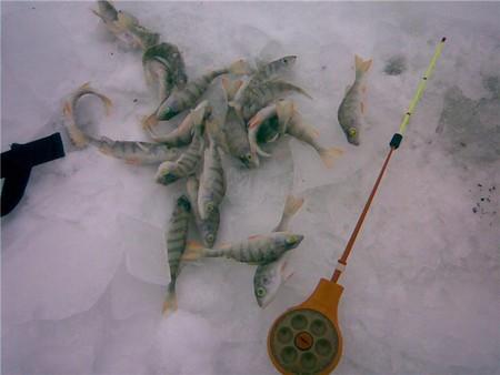 Зимняя рыбалка: открытие сезона-2010 — фото 3