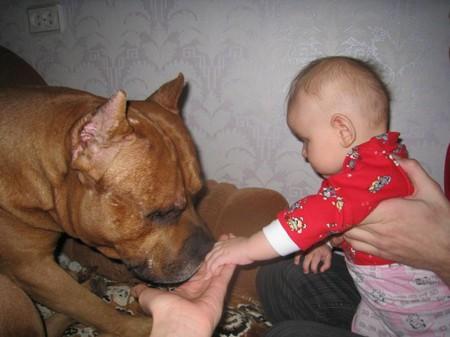 """""""Боец"""" и малыш — фото 4"""