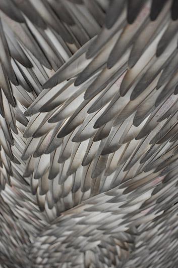 Чудо в перьях Кейт МакГвайр — фото 3
