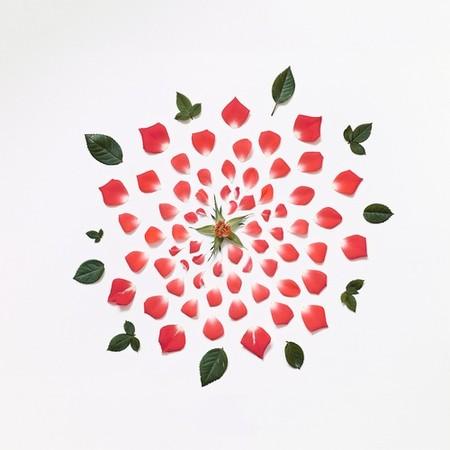 Взорванная роза )