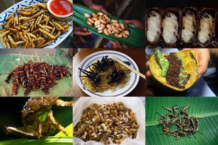 Двенадцать самых вкусных блюд из насекомых — фото 29