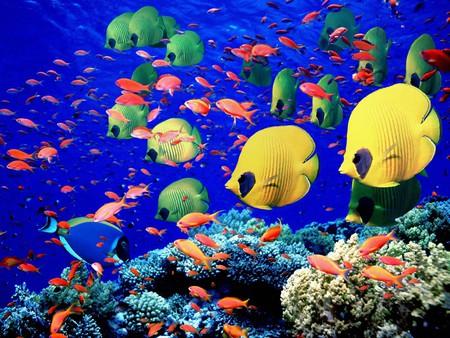 Вот такую картинку можно увидеть, погрузившись под воду