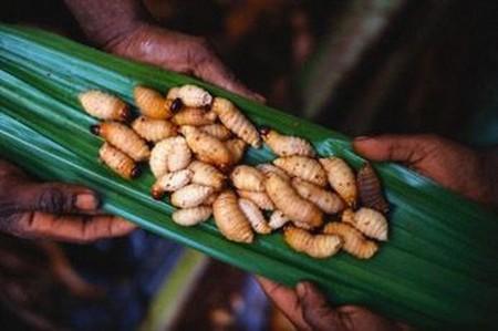 Вкус личинки жука-усача похож на жирный бекон