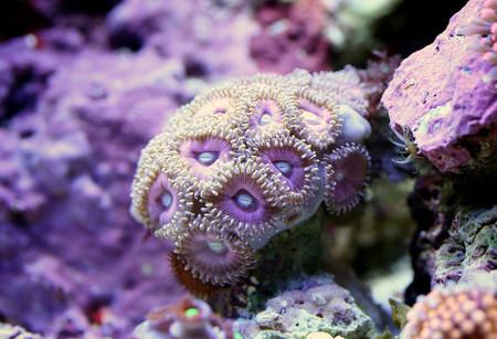 Удивительный мир кораллов: Макрофотографии Феликса Салазара — фото 9